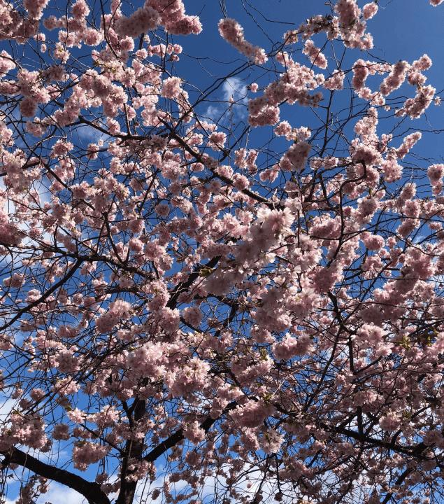 https://slussen.azureedge.net/image/353/blomma2.jpg